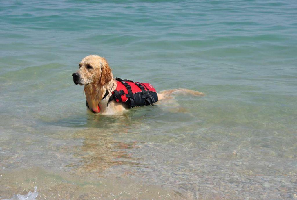 cane con salvagente al mare